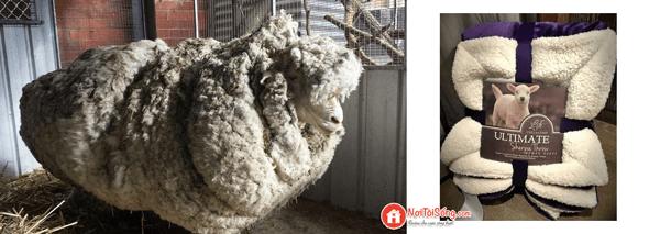 công dụng của chăn lông cừu là gì
